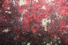 Rouge, 75x55cm